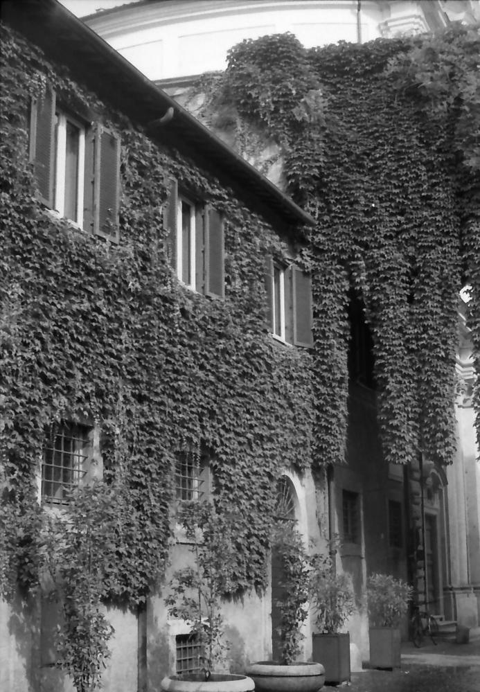 33 Rome Foliage